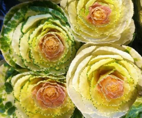 flores-interior