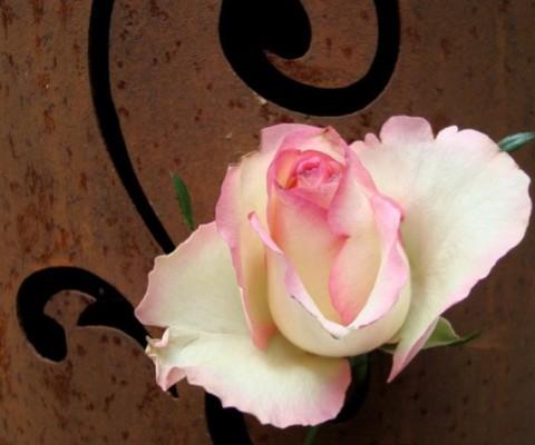 flora-miserachs-roses
